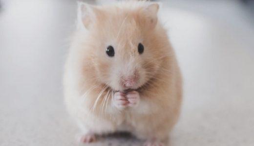子供にウケるw:iPhone と Google AR でお部屋に動物を招待しよう!